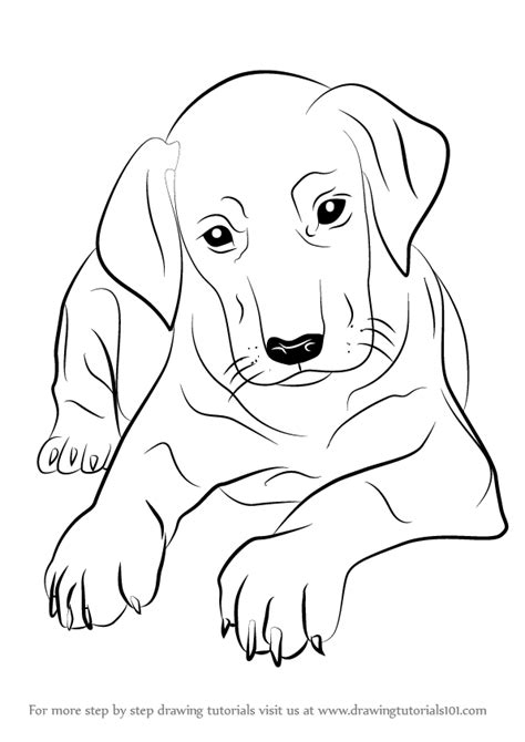 step  step   draw doberman puppy