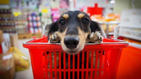 dog owners   rules  shopping  fido