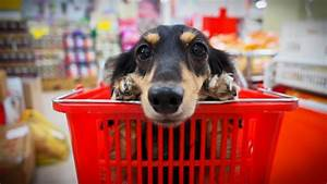 Fido Pet Shop : dog owners there are rules for shopping with fido even in pet friendly stores chicago tribune ~ Markanthonyermac.com Haus und Dekorationen