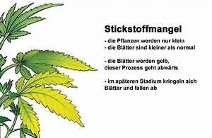 Stickstoffmangel Bei Pflanzen : stickstoffmangel cannabis 1000seeds ~ Lizthompson.info Haus und Dekorationen