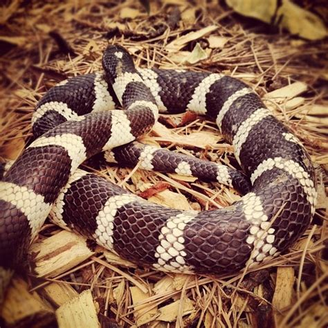 images  snakes  pinterest python pets