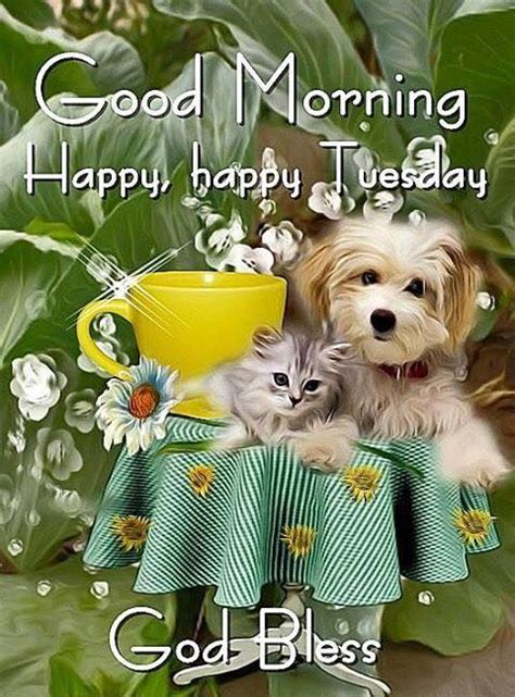 kitty puppy good morning happy happy tuesday pictures