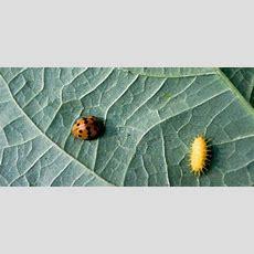 25+ Best Ideas About Bug Identification On Pinterest