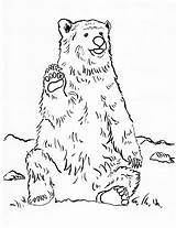 Bear Coloring Grizzly Pages Realistic Printable Template Pdf Samanthasbell Step Printables Getcolorings Today Getdrawings Drawing Results sketch template
