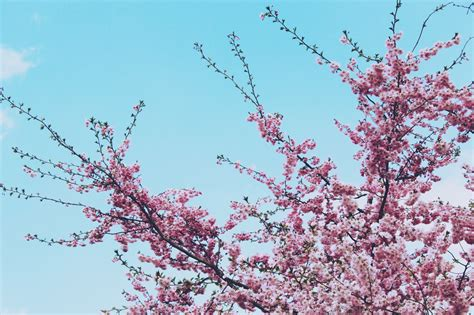 Free Images : tree nature branch plant sky flower