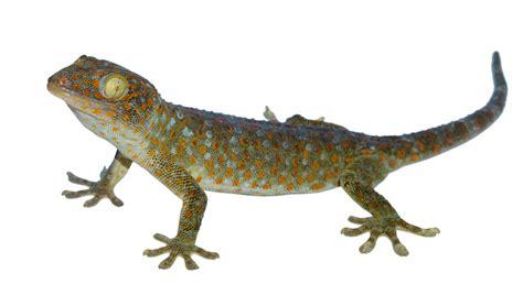 calling crossrail  lizard  londonist