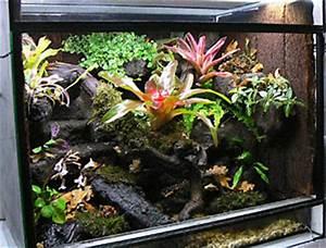 Terrarium Für Pflanzen : regenwaldterrarien und pfeilgiftfr sche aus oldenburg ~ Frokenaadalensverden.com Haus und Dekorationen