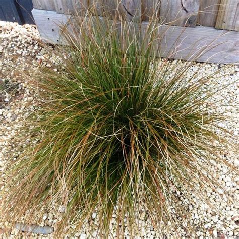 grasses for landscaping landscaping with grasses