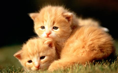 Baby Animal Wallpapers Desktop - baby animal wallpaper hd images one hd wallpaper