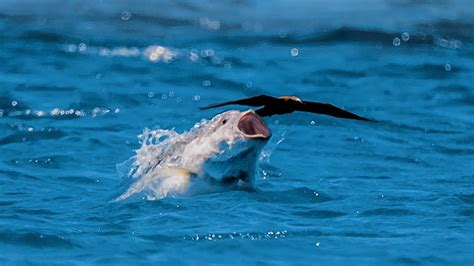 bird  fish blue planet ii youtube