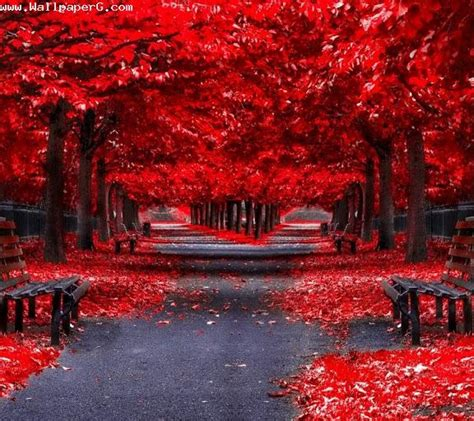 empty red road hd nature wallpapers