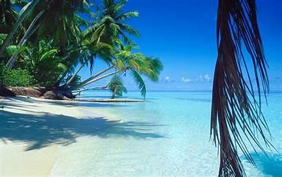 Tropical Beach Palm Trees Island Landscape Summer