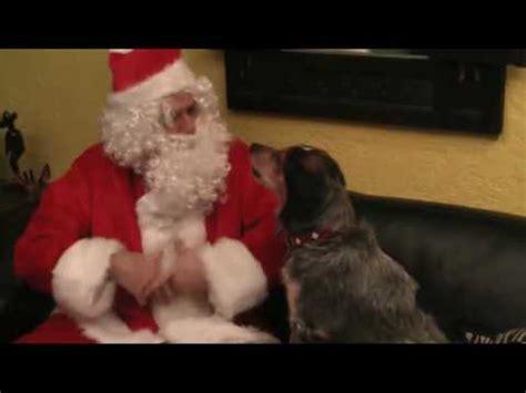 lustig tierisches duett weihnachten singender hund