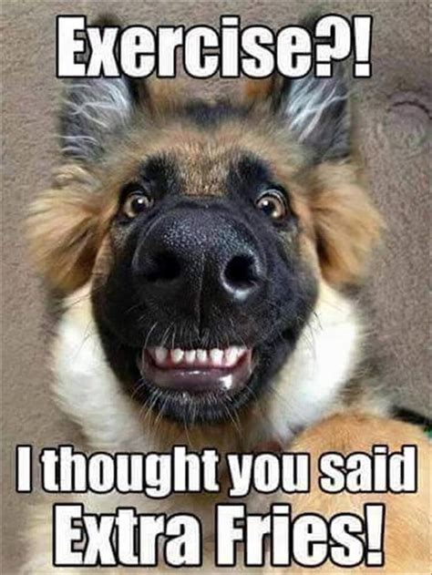 Funniest Meme Pics - best 25 dog jokes ideas on pinterest puppy jokes funny husky pictures and funny jokes with