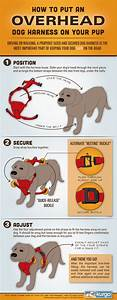 3 Easy Steps To Put On A Dog Harness