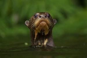 Le 10 foto più belle che ritraggono gli animali selvatici