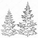 Pine Tree Drawings Drawing Pencil Coloring Sketch Outline Forest Clipart Sketches Sketchite sketch template