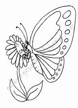 Coloring Pages Butterfly Butterflies Printable Flowers Drawings sketch template