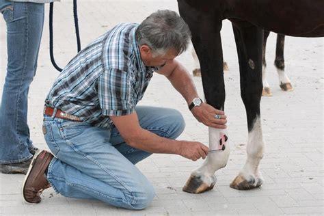 dierengeneeskunde de bloedzuigertherapie bij ziekten