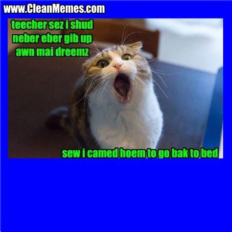 Clean Cat Memes - cat memes clean memes the best the most online