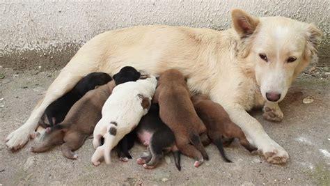stock video clip  stray dog feeding puppies  milk