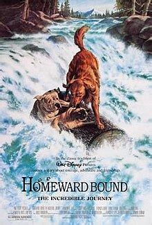 homeward bound  incredible journey wikipedia