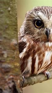 owl wallpapers for iphone desktop background