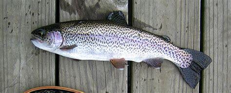table rock lake crappie fishing report lake degray crappie fishing report