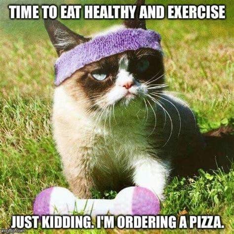 Mere Cat Meme - de 25 bedste id 233 er inden for angry cat memes p 229 pinterest humor gnaven kat sur kat og grumpy
