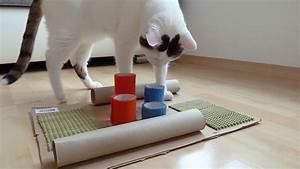 Gemüse Für Katzen : happy cat fummelbrett f r katzen selber basteln youtube ~ Watch28wear.com Haus und Dekorationen