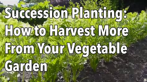 How To Plant A Vegetable Garden In Your Backyard by Succession Planting How To Harvest More From Your