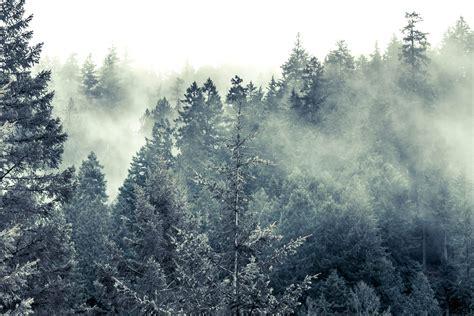 kostenlose bild kalt nebel schnee holz baum winter