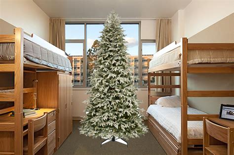 overzealous christmas freak annoys rieber terrace roommate