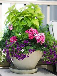 Container Gardens with Geraniums