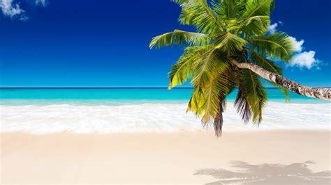 white sand beach wallpaper  coconut tree caravan