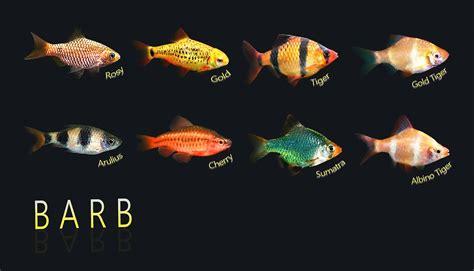 time  community fish animal scene magazine