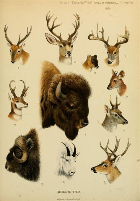 big game  europeasiana animalshoofed mammals
