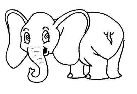 maestra de infantil los elefantes caracteristicas clasificacion gestacion fotos gifs