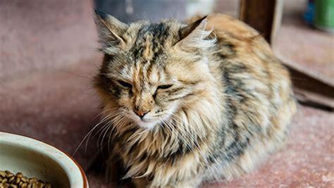 ungewoehnliche krankheitssymptome bei katzen purina