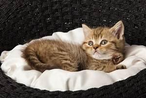 Laver Un Chaton : dresser un chaton ~ Nature-et-papiers.com Idées de Décoration