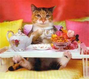 Petit Dejeuner Au Lit : petit dejeuner au lit chat drole et marrant ~ Melissatoandfro.com Idées de Décoration
