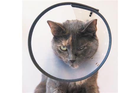 Plastic E Collar for Cats