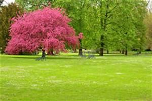 Rosa Blühender Baum Im Frühling : rosa hartriegel im park stockfoto bild 47221208 ~ Lizthompson.info Haus und Dekorationen