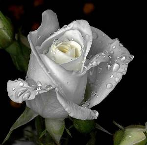 Rain Drops On Flowers.Wallpapers: Rain Drops On Glass ...
