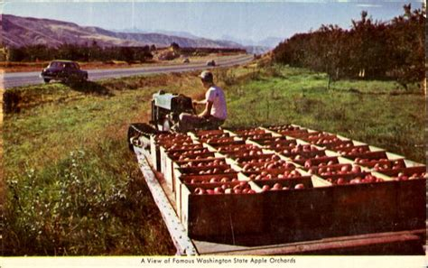 A View Of Famous Washington State Apple Orchards Fruit
