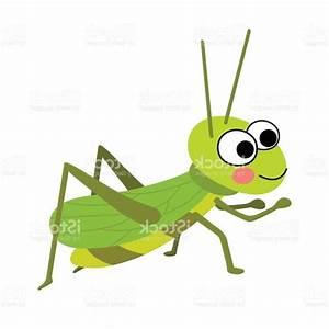 HD Cricket Bug Vector Images | Graphic Design Vectors ...
