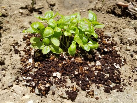 Add eggshells to the compost pile. How to Use Eggshells and Coffee Grounds in the Garden as Compost - Chowhound