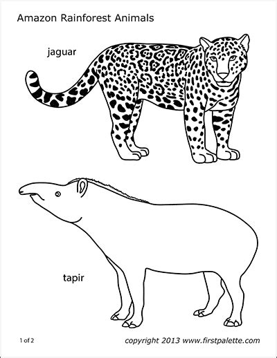 tapir  printable templates coloring pages firstpalettecom
