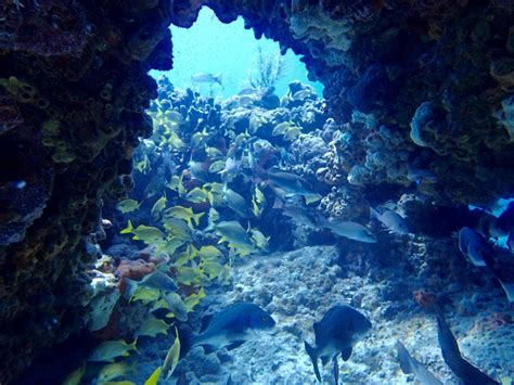 reefs quiescence diving services