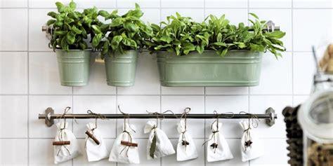 decorar la cocina  plantas  ideas muy originales